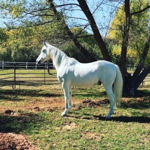 Caspian-Janan-Horse-Selah-Carefarm-Sponsor-4