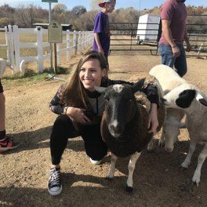 Dolly-Mama-Sheep-Saleh-Carefarm-Sponsor-2