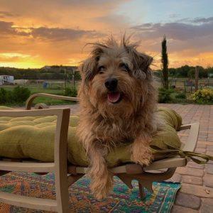 Finn-Dog-Saleh-Carefarm-Sponsor-4