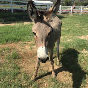 Fiona-Donkey-Selah-Carefarm-Sponsor-4