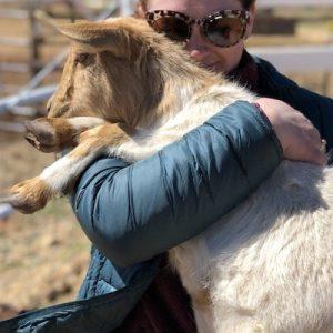 Greta-Goat-Sponsor-Saleh-Carefarm-3