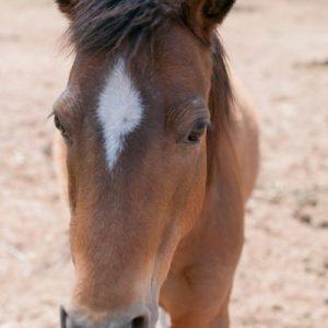 Little-Chey-Horse-Selah-Carefarm-Sponsor-1