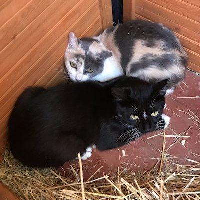 Loki-Anjali-Cats-Selah-Carefarm-2