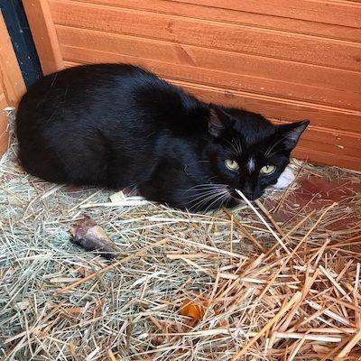 Loki-Anjali-Cats-Selah-Carefarm-3