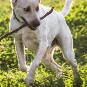 Perseverence-Dog-Saleh-Carefarm-Sponsor-2