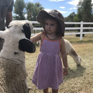 Porcelina-Sheep-Saleh-Care-Farm-Sponsor-3