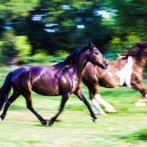 Stormy-Horse-Selah-Carefarm-Sponsor-3