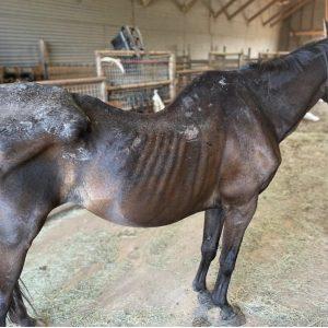 Gus-Horse-Saleh-Carefarm-Sponsor-2